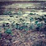 Bulldozed Lake