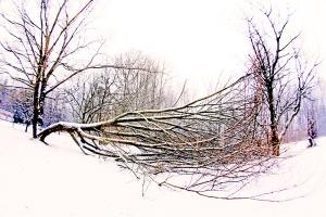 alas poor tree