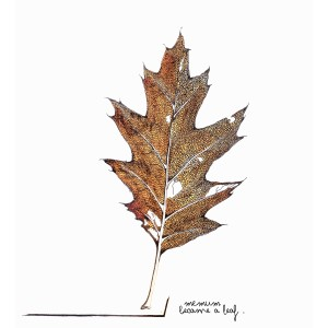Became A Leaf Cover