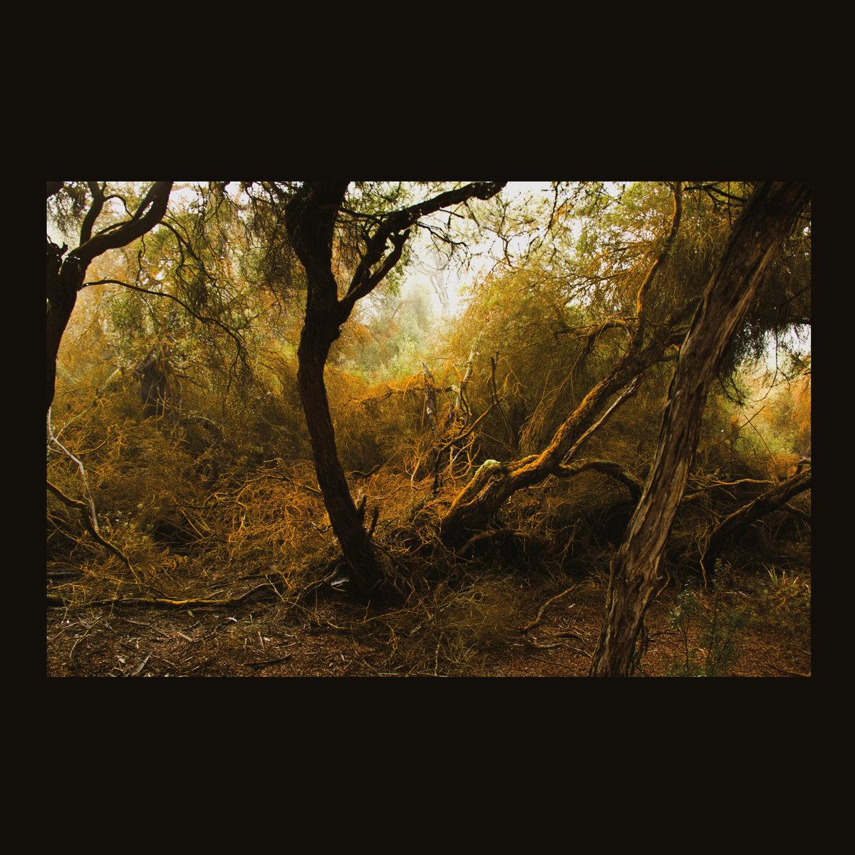 Lubomyr Melnyk ~ FallenTrees