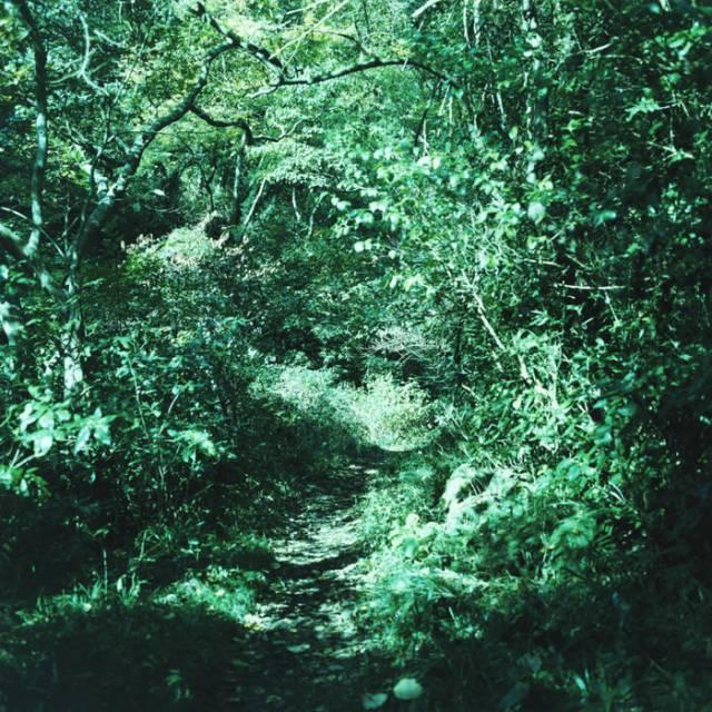 ironomi ~ 琹の葉 kotonoha